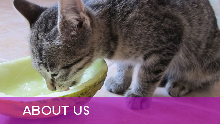 About us -  cat with melon