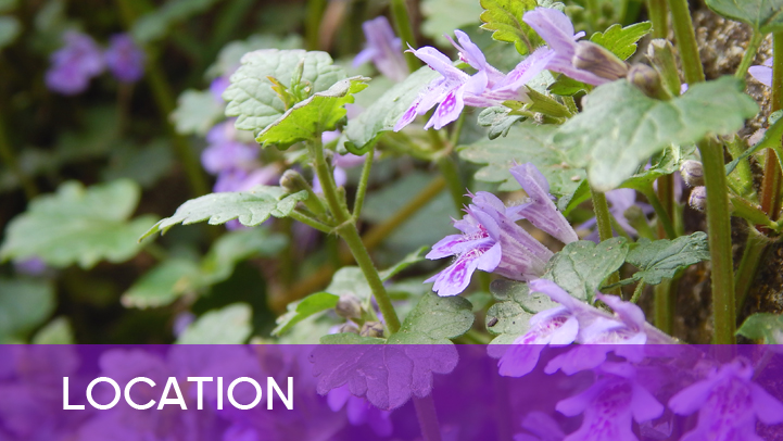Location - purple flowers
