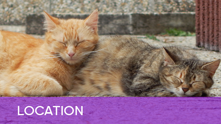 Location - two cats