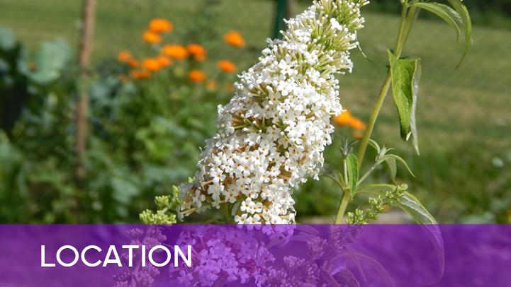 Location - white flower